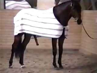 Crazy sexy stallion fucking her wet cunt