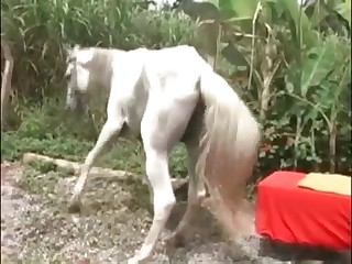 beasttube dog horse